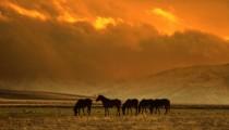 2106864-gunbatiminda-atlar