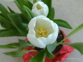 640-flower124