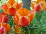 640-flower164