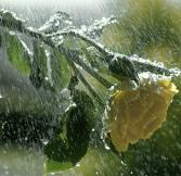 Hareketli-yağmur-resimleri