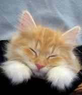 Sevimli Kediler-3